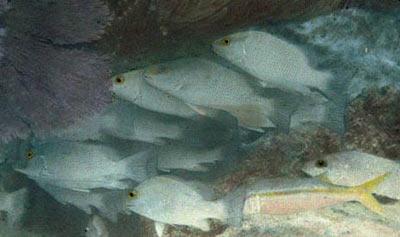 İlk renkli su altı fotoğrafı